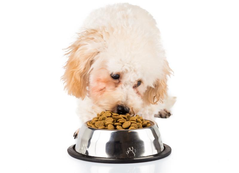 愛犬に与えている水分、ほんとに足りてる?必要な水分量を表でチェックしよう