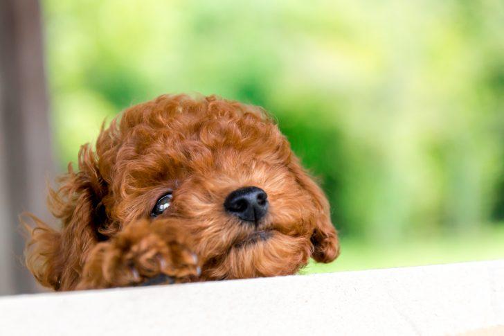 犬にも必要な栄養素=カルシウム。愛犬に必要な量は足りている?どんな食品がいいの?