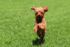 犬は楽しいのが大好き!しつけは飼い主も楽しみましょう