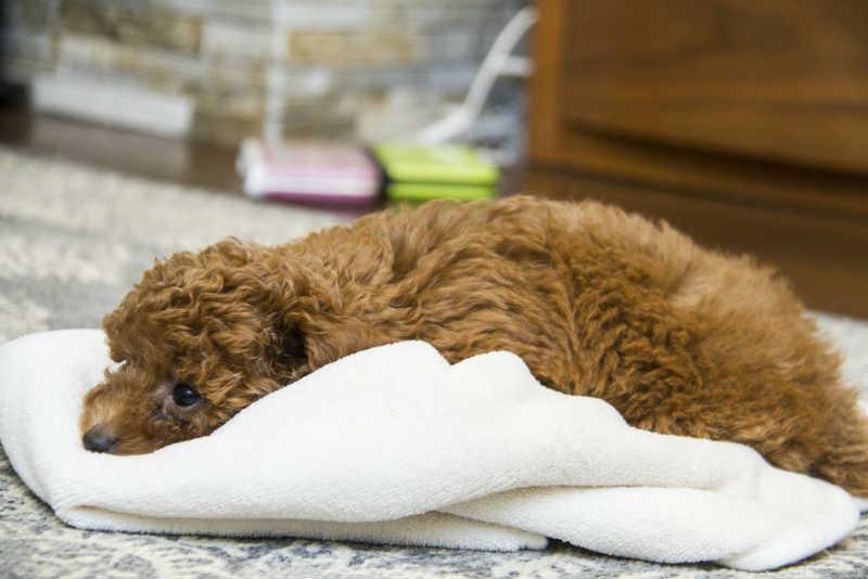 犬だって寒さは感じます!犬の寒さの感じ方と対策について