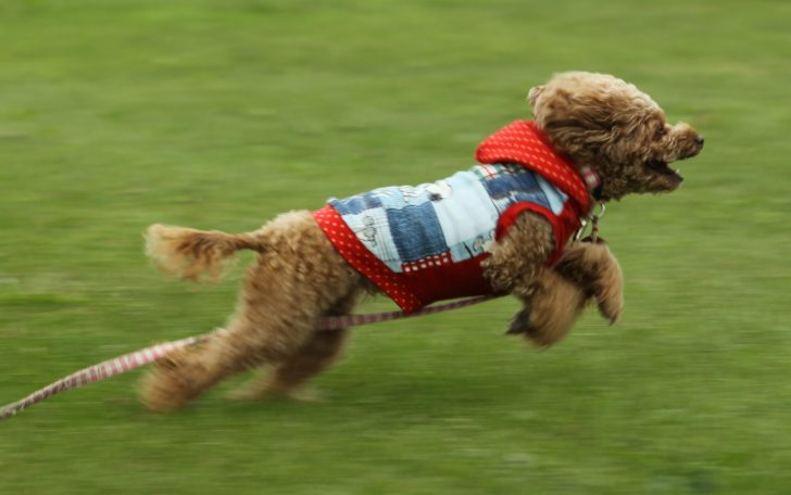 おしゃれに愛犬の寒さ対策を!「ダウンジャケット」を使った防寒対策