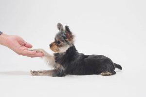 自宅で愛犬の爪切りをしよう!黒い爪をもつ犬種の場合