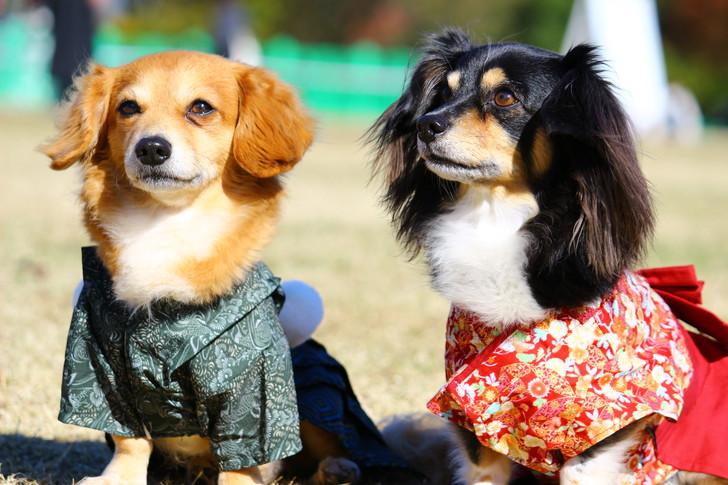 和装の犬たち