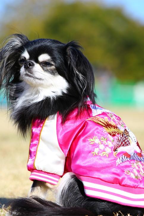 スカジャン犬