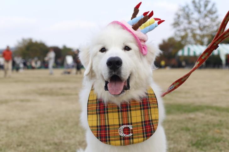 バースデー犬