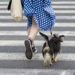 ネットでブリーダーから子犬を購入する時の注意点