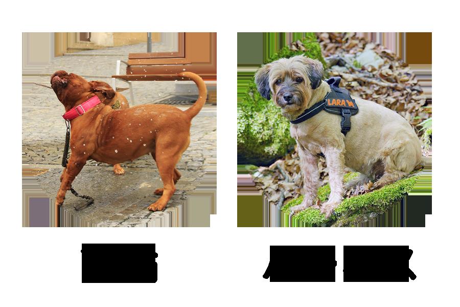 犬の首輪とハーネス
