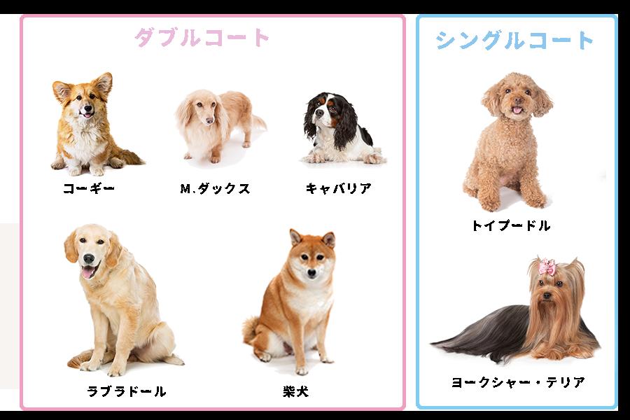 ダブルコートの犬種・シングルコートの犬種