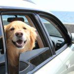 愛犬とのドライブの楽しみ方と抑えておきたい事前準備
