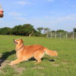 運動不足を解消しよう!愛犬と一緒に楽しめる6つのドッグスポーツをご紹介!