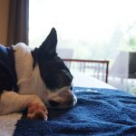愛犬と一緒に泊まれるホテル・宿!お出かけ準備と注意点