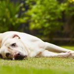 日々の食事で犬にも肝臓ケア!犬の肝臓に良い食べ物5つ