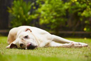 犬の平熱ってどれくらい?体温の計測方法は?体温管理で病気を防ごう