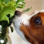 【獣医師監修】愛犬の健康にはセロリがおすすめ!その効能と注意点について