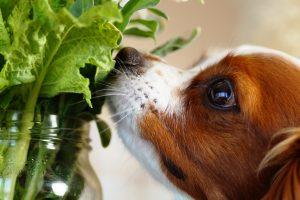 【獣医師監修】愛犬とハーブティーを楽しもう!身近に手に入るおすすめハーブ(まとめ)
