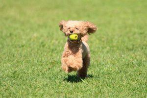 愛犬との絆がグッと深まる!人気のドッグスポーツをご紹介!