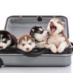 愛犬との旅行前にやっておくべき3つのこと!近場から慣らしてあげよう