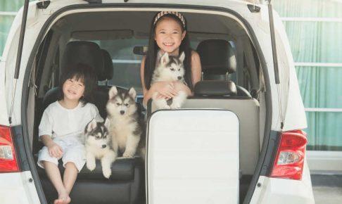 愛犬と車中泊!愛犬の車中泊に必要なものと注意点とは?