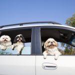 ペット可のレンタカー会社まとめ。レンタカーを借りる際に覚えておくべきルールとは?
