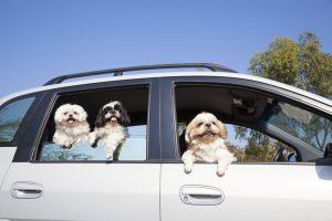 車内留守番はとっても危険!愛犬との車でのお出かけで抑えておきたい注意点