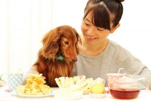 【獣医師監修】愛犬のアトピーや認知症に効果的!「えごま油」の上手な与え方