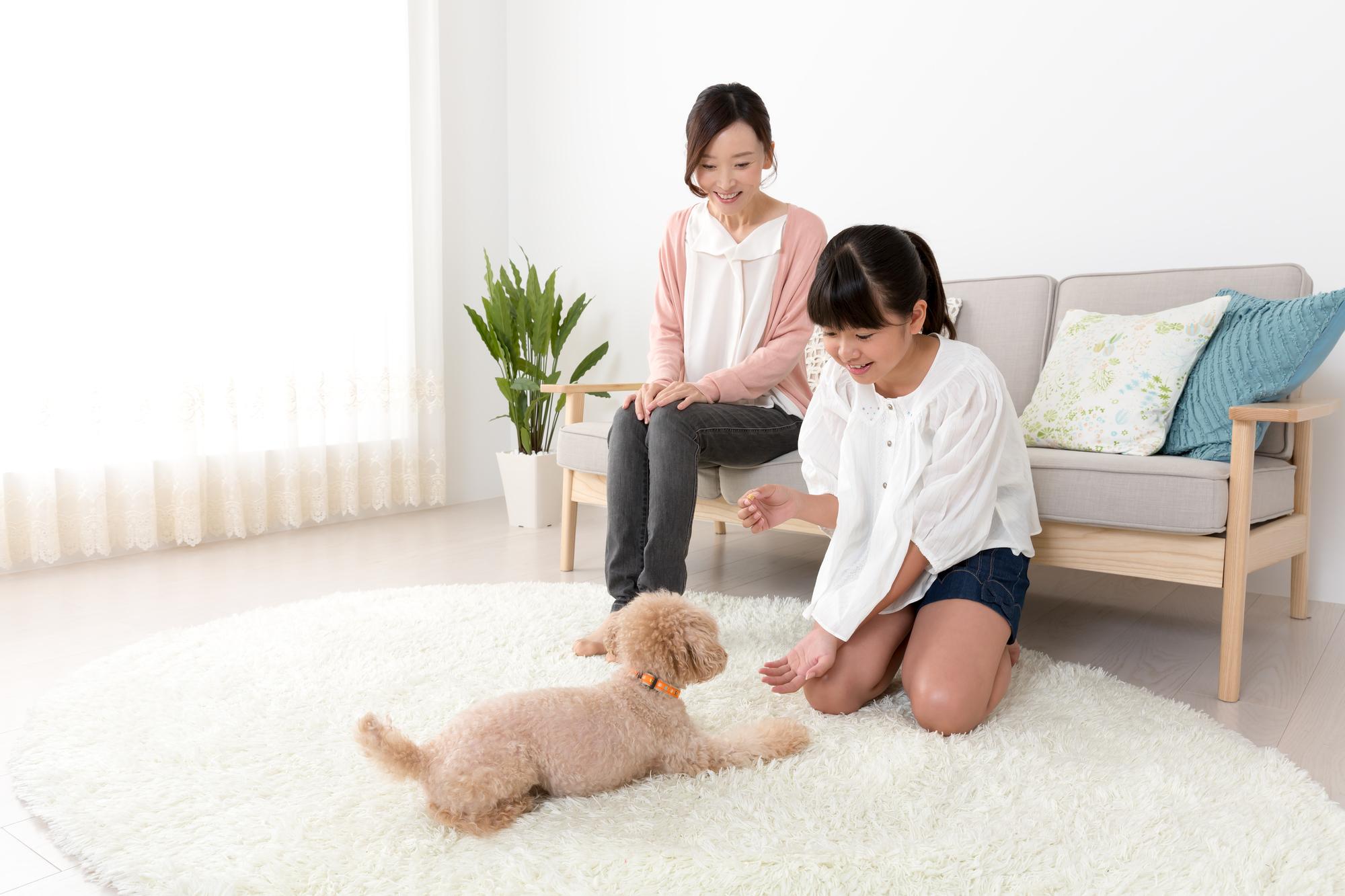 ボディコンディションスコア(BCS)モデルは愛犬の肥満チェックツール!