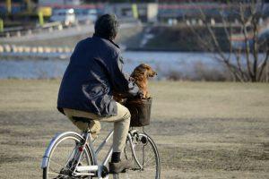 愛犬と自転車でおでかけ♪注意点と便利グッズ