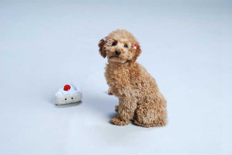 犬のお留守番は何時間まで?最適時間と気を付けるべきポイント