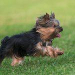 【獣医師監修】ドッグランで遊ばない!?愛犬のドッグラン嫌いを克服する方法