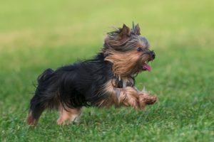 【獣医師監修】健康食材の定番「ささみ」の成分と愛犬への与え方について