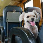 愛犬との電車でお出かけ!抑えておきたいルールとマナー