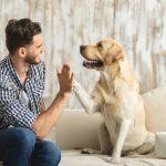 愛犬との主従関係を上手に作る4つのテクニックとは?
