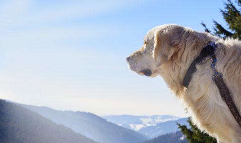 犬連れ登山はOK?それともNG?愛犬との山の楽しみ方