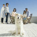 町田市で評判の動物病院7選!土日対応可能な動物病院