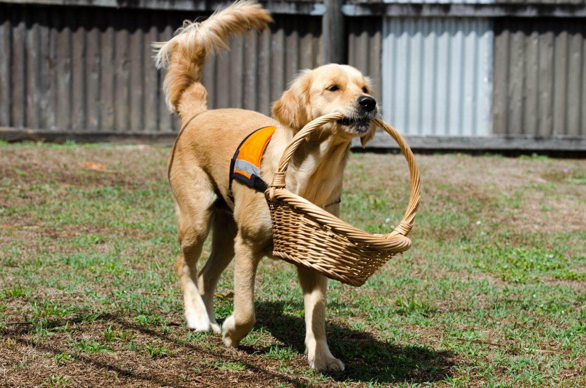 犬のしつけの基本の合図。おいで(こい)を教えて犬を呼び戻す