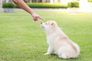 旅行やお出かけ!愛犬を預けるときに犬が感じているストレスを知っていますか?