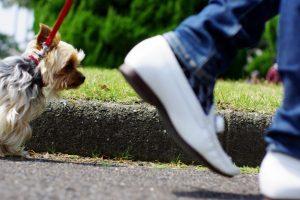 犬とのお散歩中に使いたい!ヒール・つけ(ついて)・横②