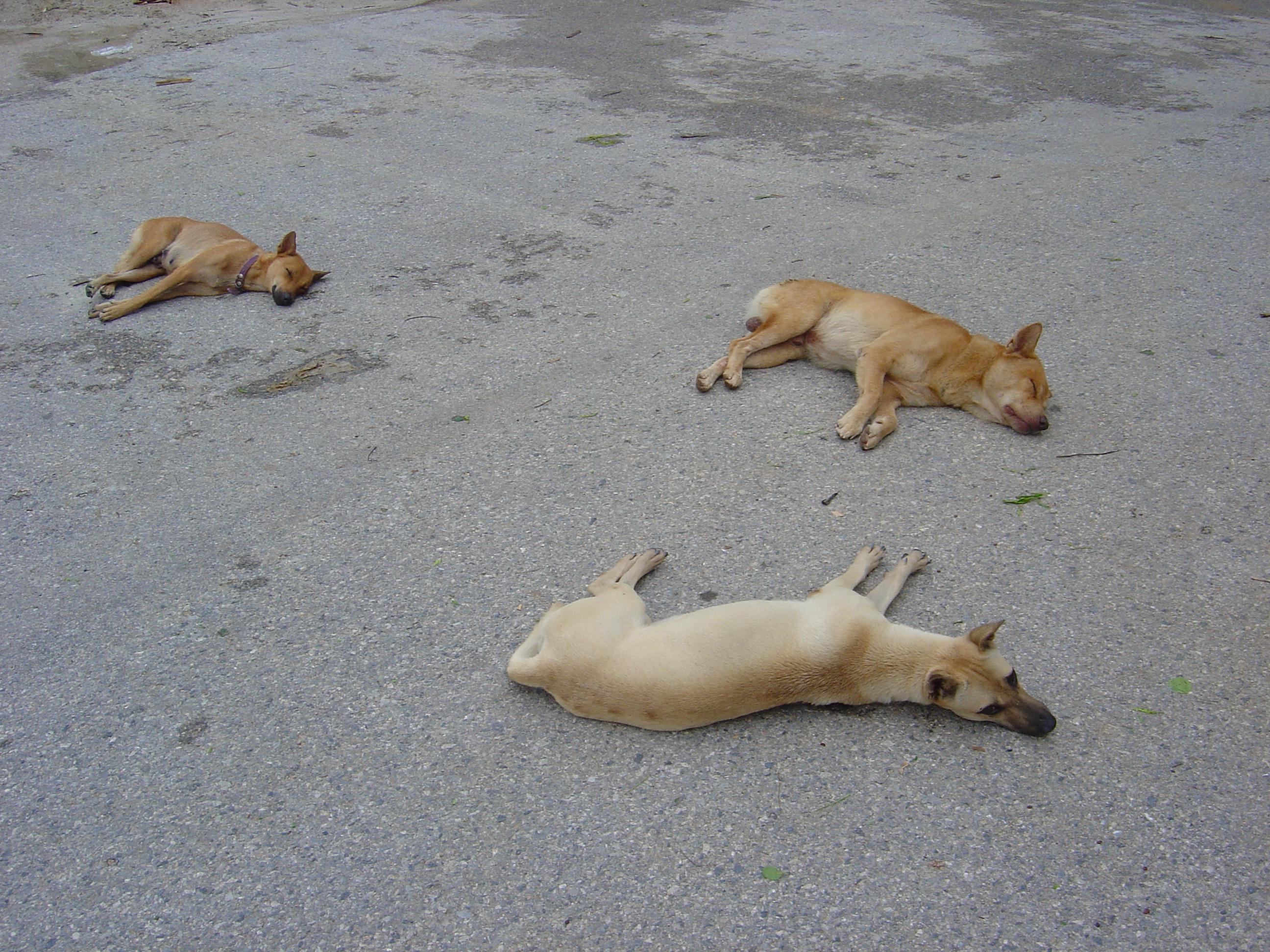犬と遊ぶ時に使いたい!バン(撃たれて死んだふり)・ゴロンのしつけとは