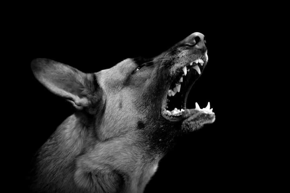 自分の犬が吠えすぎる!早く手を打つべき3つの理由とは