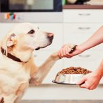 マンションで犬を飼うならしつけは必須!絶対知るべき3つのこと