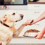 犬を飼い始めて最初のステップ!お手・おかわりからしつけをスタート