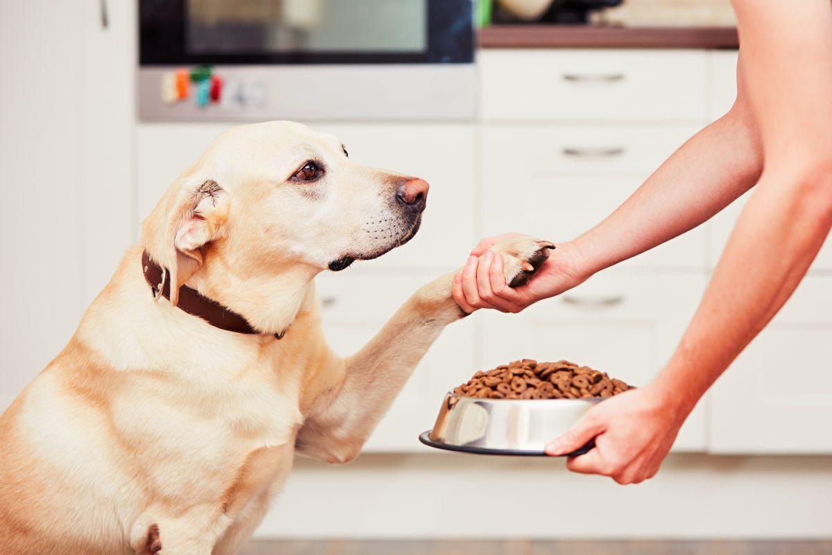 信号待ちにも便利!犬のしつけ「おすわり」の簡単な教え方は?
