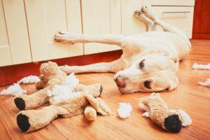 【犬の問題行動】周囲も飼い主もメイワク!興奮する犬をしつけで直す