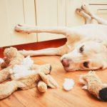 適切な犬のしつけは飼い主の義務。愛犬に問題行動をさせない秘訣