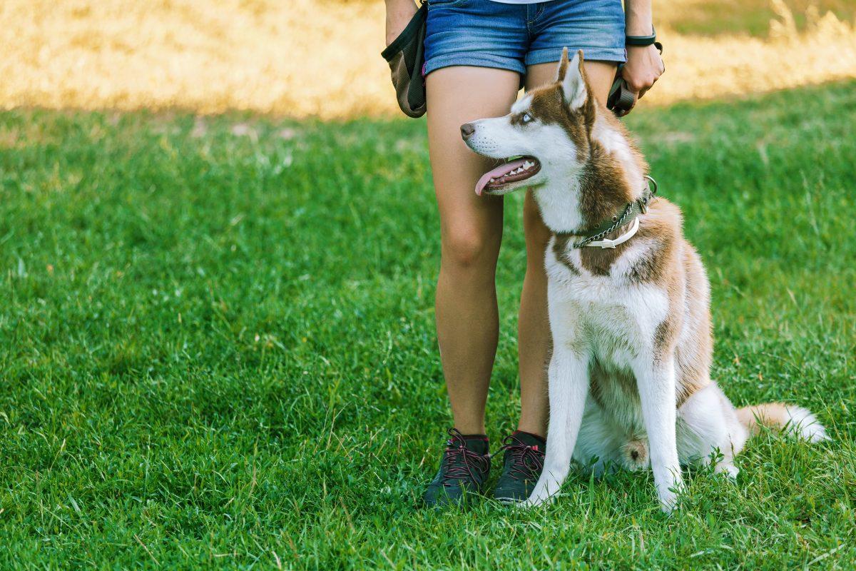 犬のしつけの専門家!信頼できるドッグトレーナーの探し方3選
