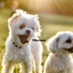 外出できない日が続く梅雨の季節、室内でできる愛犬のストレス発散法って何?