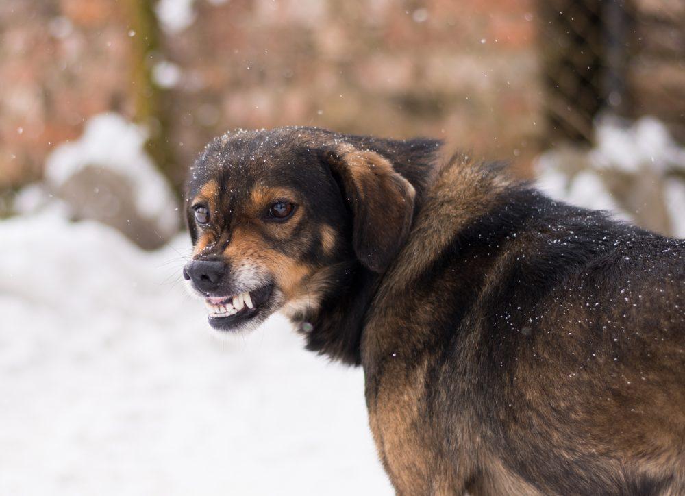 犬と食事について知っておくべき3つのコト