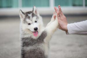 【犬のしつけ】ダメなことはダメと叱るのが大切な3つの理由