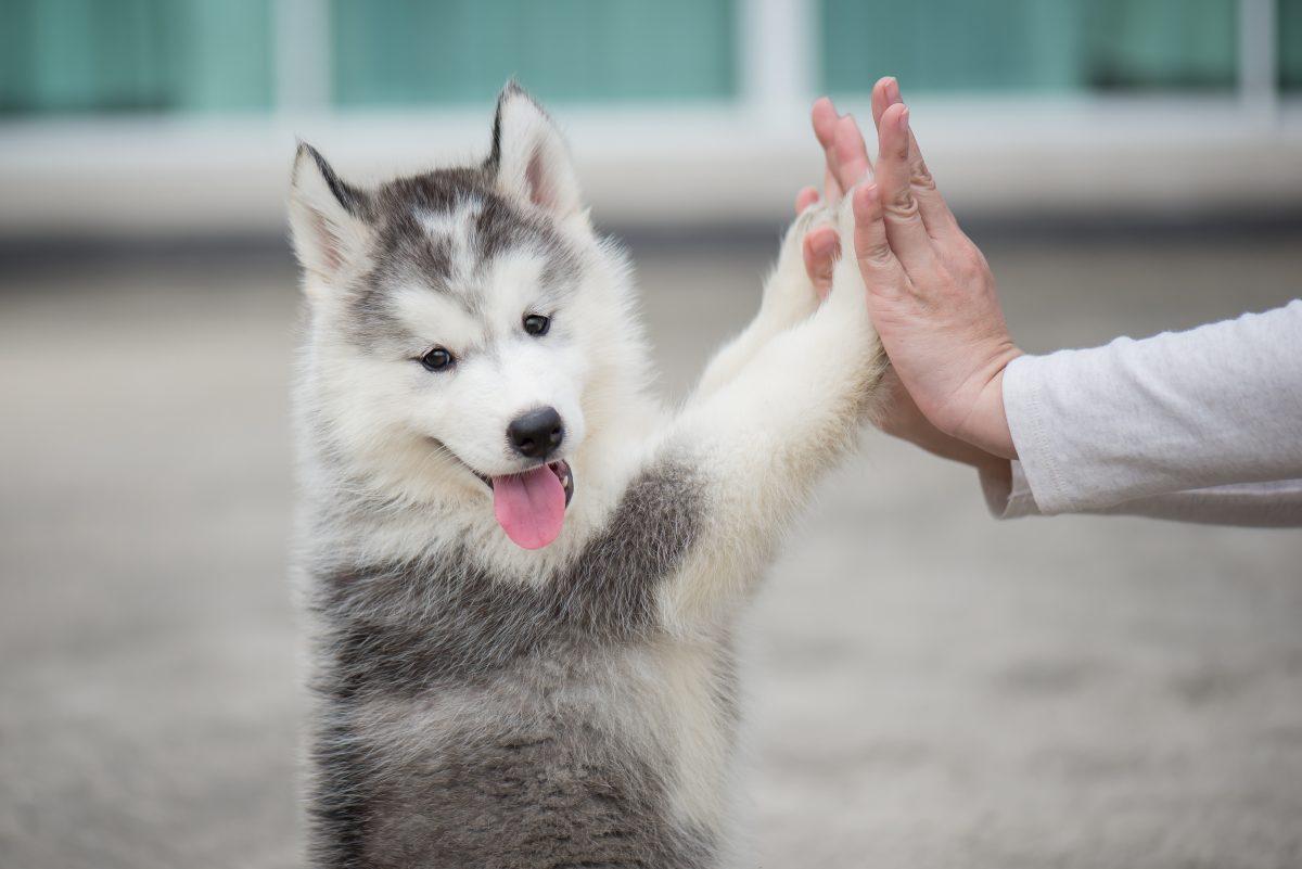 成犬でもできる!簡単なゲームで犬の適応力を高めよう