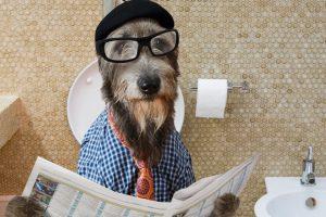 ワンちゃんにトイレを教える掛け声。ワンツーを犬に教える方法②